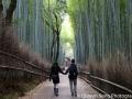 A walk through the Arashiyama Bamboo Grove