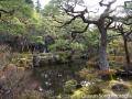 What's this you ask? The crazy beautiful gardens surrounding Ginkaku-ji