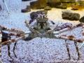 The Alaskan King Crab