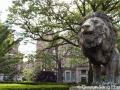 Roar, lions, roar!