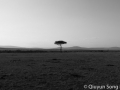 Lone tree in the barren African savannah