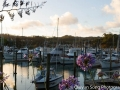 The marina at Tutukaka - New Zealand is a sailing-mad country