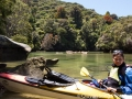 Kayaking the Abel Tasman with Pohutukawas in full bloom all around