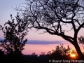 The sun sets behind the baobab tree