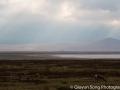 Beautiful light on the plains as Thomson gazelles graze