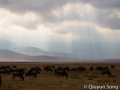 Morning light on the Ngorongoro Crater