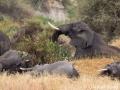 A group of sleeping elephants