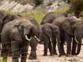 Large herd of elephants near a waterhole