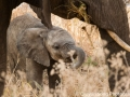 Really adorable baby elephant