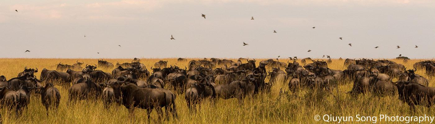 The Spellbinding Maasai Mara